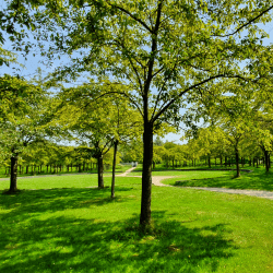 Duurzame oplossingen voor de groenvoorziening