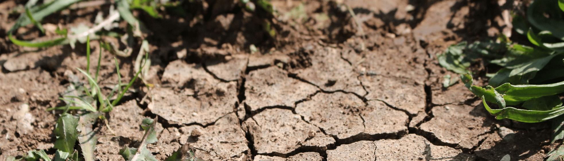 Verbeter de bodem bij langdurige droogte