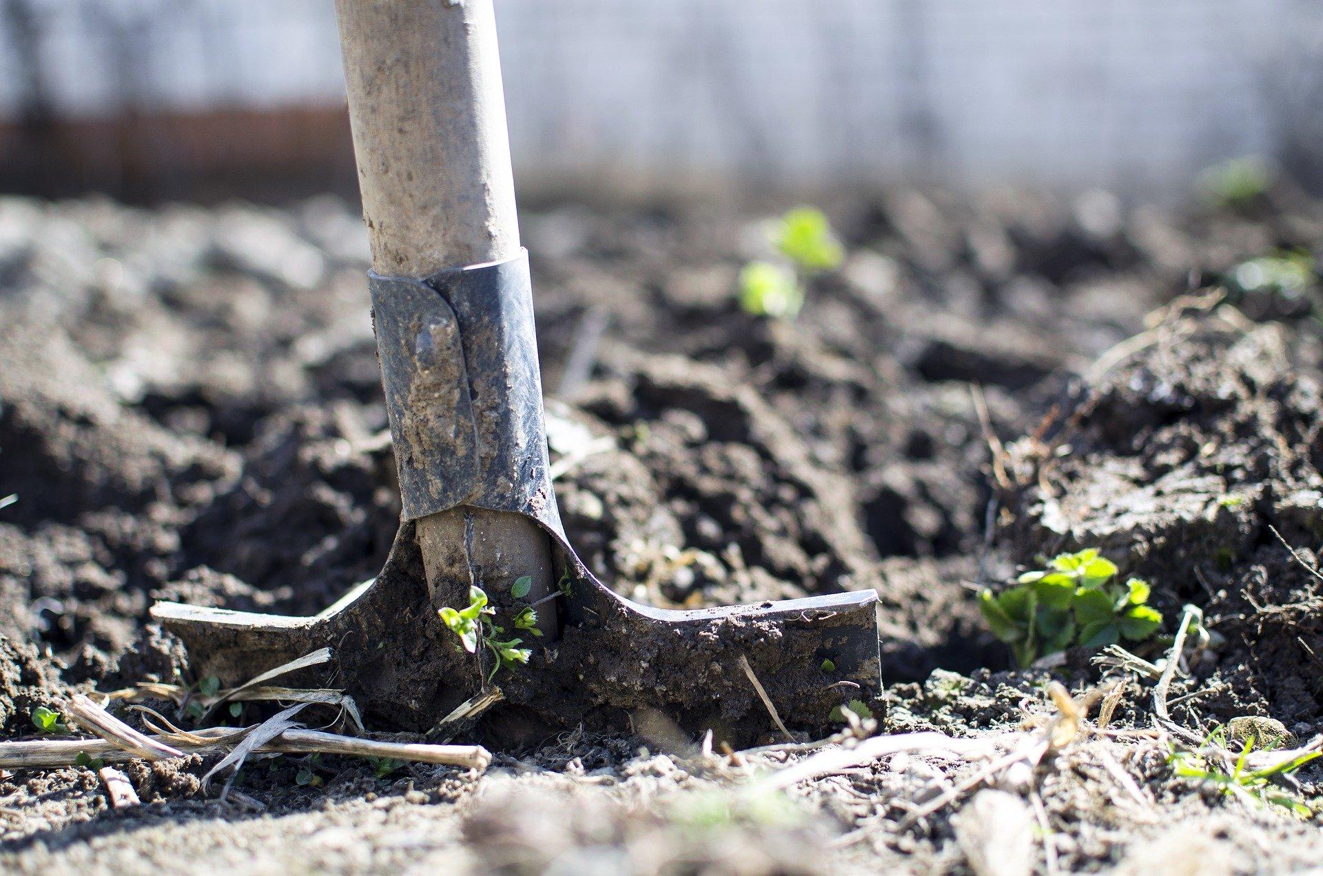 Sneller herstel na droogte door een gezonde bodem