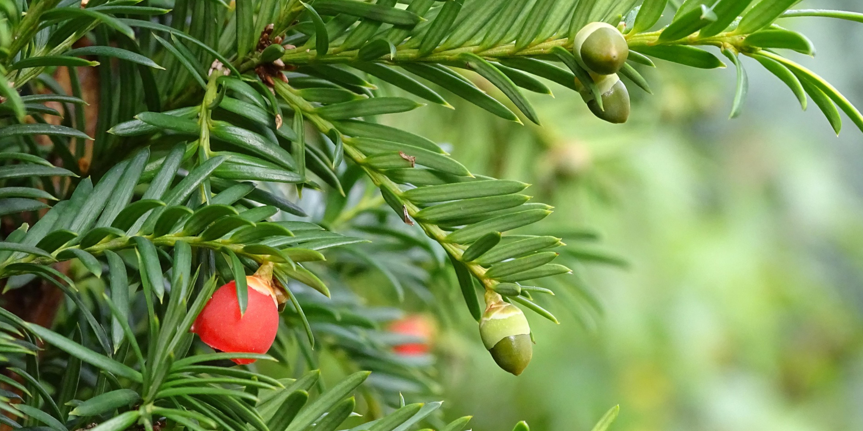 Maak bomen en planten natuurlijk weerbaar